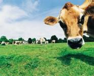 Директору муромского сельхозпредприятия дали 2,5 года условно за подлог
