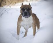 Хозяин собаки, покусавшей муромлянку в продуктовом магазине, был найден